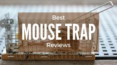 Here are top 10 best mouse traps 2017 and reviews. We would like to introduce you how to choose a good trap to get rid of mice in your home.