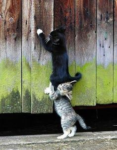 Cute Pet Pictures, Pics: Kittens, Cat, Cats, Piglets, Dogs, Puppies, Pets  Animals, Katze, Katzen, süß, klein, große Liebe, Katzenkind, Katzenkinder, schwarze Katze, schnuckelig, zuckersüß, große Augen