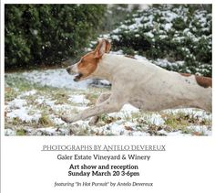 """Renown local photographer Antelo Devereux will show many of his recent works for a reception and art show Sunday March 20from3-7pm at #GalerEstate  Mr. Devereux just completed his most recent photography book, through Schiffer Publishing House, """"Philadelphia""""; other books include """"Chester County"""" and """"Maine"""". Join us for a wonderful fine art photography show and meet the artist."""