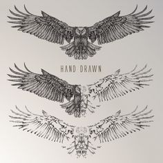 Hand drawn eagle collection - # eagle # collection # Hand - Mens world - Tatouage