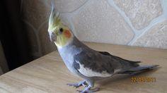 My dear pet whom I lost a few months ago!