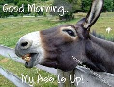 Shop The Original Jackass Funny Donkey Mule Farm Animal Tile created by azlaird. Personalize it with photos & text or purchase as is! Funny Good Morning Quotes, Good Night Quotes, Morning Humor, Morning Morning, Good Morning Good Night, Good Morning Wishes, Benjamin Franklin, Farm Animals, Funny Animals