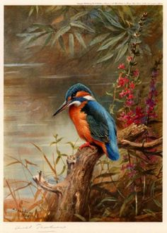 archibald thorburn summer kingfisher paintings