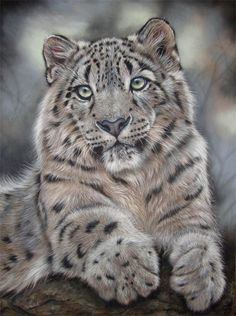 kat-davies-realm-of-the-snow-leopard-painting