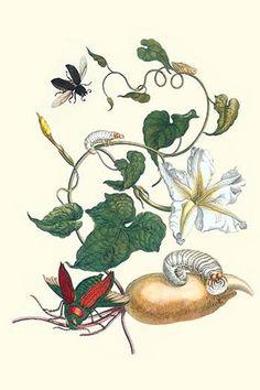 Moonflower with Giant Metallic Ceiba Borer & a Horned Passalus Beetle