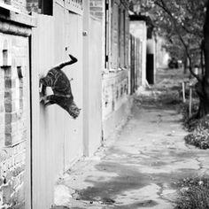 Wall walking Olga Bushkova