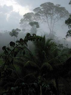 Costa Rica Jungle; photo by Nikki