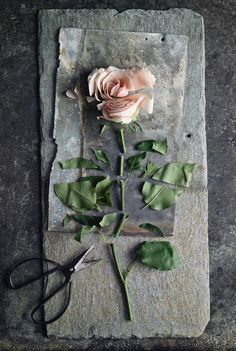 Cut up rose kept in its original form. Quirky new take on a picture of a flower.