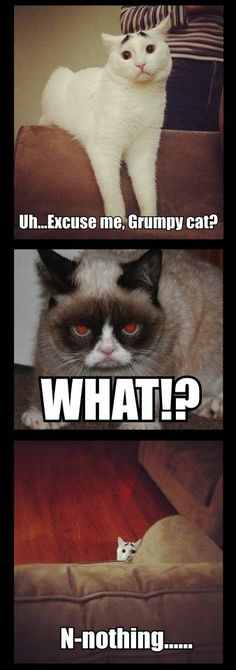 Grumpy cat, grumpy cat meme, grumpy cat quotes, funny grumpy cat quotes, grumpy cat jokes …For the funniest quotes and hilarious pictures visit www. Grumpy Cat Quotes, Funny Grumpy Cat Memes, Cat Jokes, Funny Memes, Hilarious Jokes, Cats Humor, Funny Minion, 9gag Funny, Cute Animal Memes