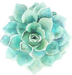 'Blue-Green Succulent Watercolors Illustration' Sticker by artonwear Watercolor Succulents, Green Watercolor, Watercolor Flowers, Watercolor Paintings, Succulents Wallpaper, Succulents Drawing, Watercolours, Plant Drawing, Paint And Sip