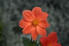 Orange Flowers - Bing Images
