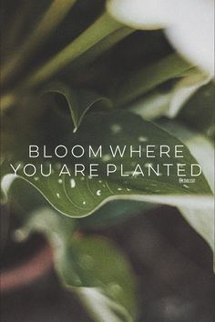 Bloom where you are planted Stress, Bloom Where You Are Planted, Plants, Forgiveness, Pictures, Plant, Psychological Stress, Planets
