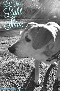 Let Your Light Shine... words of advice from a wise senior dog ©LapdogCreations