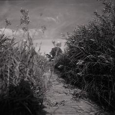 Ein Sommertag in schwarz-weiß auf der Insel Rügen. Aufgenommen mit der Pentacon Six tl.