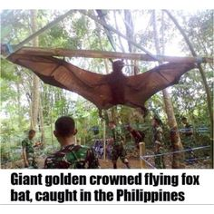 If I saw one of these flying around the jungle--I'd think it was a dinosaur.