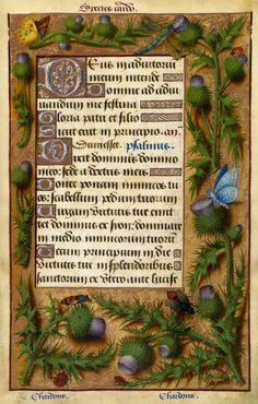 Jean Bourdichon, Border: Thistle, c. 1503-1508