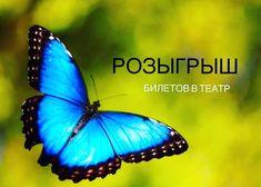 Хотите в театр? Тогда скорее заходите на наш сайт cyprusbutterfly.com.cy и участвуйте в новом розыгрыше! #Cyprus2019 #CyprusButterfly #cyprusisland Cyprus News, Fish, Pets, Pisces, Animals And Pets