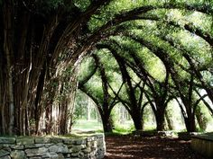 Auerworld - willow palace - I could really see using this for Elves. Living Willow, Forest Garden, Natural Building, Tree Sculpture, Pergola, Garden Spaces, Sustainable Design, Outdoor Projects, Landscape Architecture