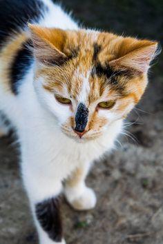 Spotted Cat by microThread.deviantart.com on @DeviantArt