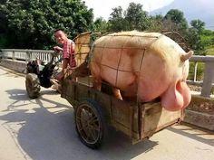 Overloaded cars, trucks, motorcycles or anything else in Thailand. http://www.islandinfokohsamui.com