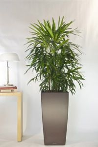 This pot is called 39 drop 39 simple and elegant let green design help you with your office plants - Tall office plants ...