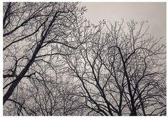 #MaisonsLaffite #landscape #photography #art #prints #photographs #фото #france #pentax645