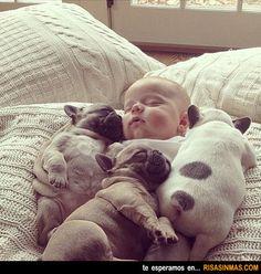 Siesta de cachorros
