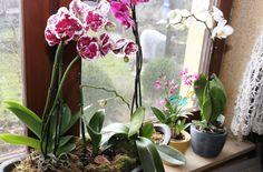 Tipps für Orchideen