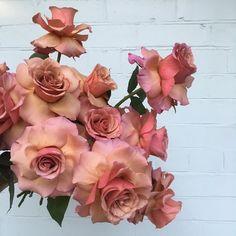 Cafe latte roses