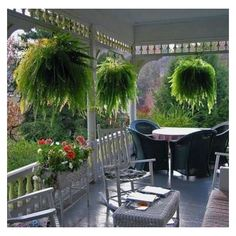 Summer, Ferns and Porches ❤ liked on Polyvore featuring home and outdoors