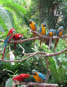 Parrots in Sentosa Island - Singapore. | Visit our photo-guide of Singapore