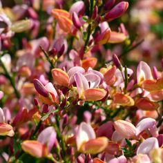 Chronicles of a Love Affair with Nature Geranium Vivace, Plantation, Tropical Plants, Shrubs, Outdoor Gardens, Magnolia, I Am Awesome, Landscape, Nature