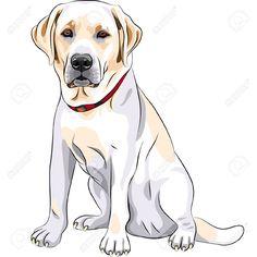 portrait of a close-up of serious yellow dog breed Labrador Retriever..