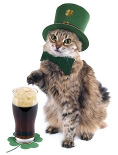 This cat who's got his hat on and beer ready | Community Post: 15 Cats Who Can't Wait For St. Patrick's Day