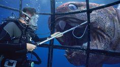 BBC 'Sea Monsters'   Framestore