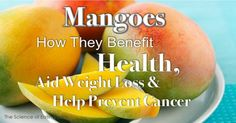 Mangos have been a popular fruit in our diet a lot longer than most people realize.  There are many different kinds of mangoes that range in...