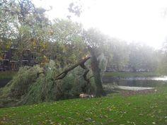 Geknakte boom Heemraadssingel.