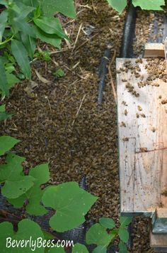 7 Steps to Take After a Honey Bee Pesticide Kill