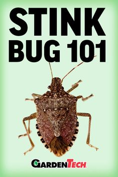 Household Pests, Stink Bugs, Japanese Beetles, Garden Pests, Pest Control, Stems, Insects, Fruit, Plants