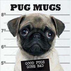 Pug Mugs: Good Pugs Gone Bad http://www.pugdelicious.com/