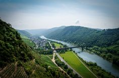Vineyard Tour around Bremm - Germany