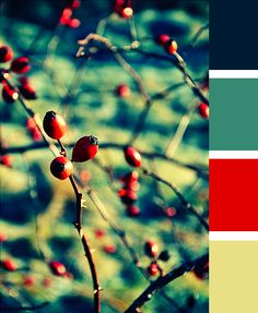 Striking color palette. Possibly blue-green walls, navy bedding, accents of the red and yellow.