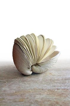 This is pretty cute... an accordion thing for little notes/pictures. You could have it filled with memories from a vacation you took, preferably from where you got the shell. :)