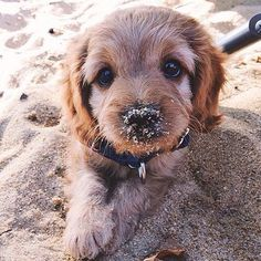 oh the sweetest pup with sand on his wee snout