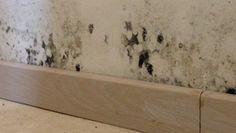 1000 id es sur le th me enlever les taches de moisissure sur pinterest tach - D ou vient la moisissure sur les murs ...