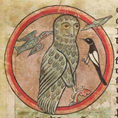 Medieval Bestiary : Owl