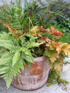 Colorful Container Gardens for Chilly Weather:  Fronds of the autumn fern (left) complement the orange-pink leaves of coral bells (right); green sedge, an ornamental grass will eventually go dormant. I'd pop in a few pansies too.