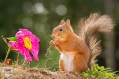 ending flower by geertweggen. Please Like http://fb.me/go4photos and Follow @go4fotos Thank You. :-)