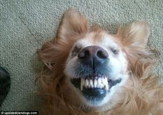 Say cheese Bailey