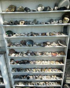 "Seabird CPH on Instagram: ""Grandmas Stone and Shell collection 🐚🐚"" Shell Collection, Sea Birds, Shells, Stone, Instagram, Conch Shells, Rock, Seashells, Sea Shells"